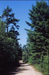 Trout Pond Pathway